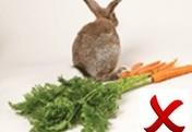 WYWS--bunnycarrots.gif