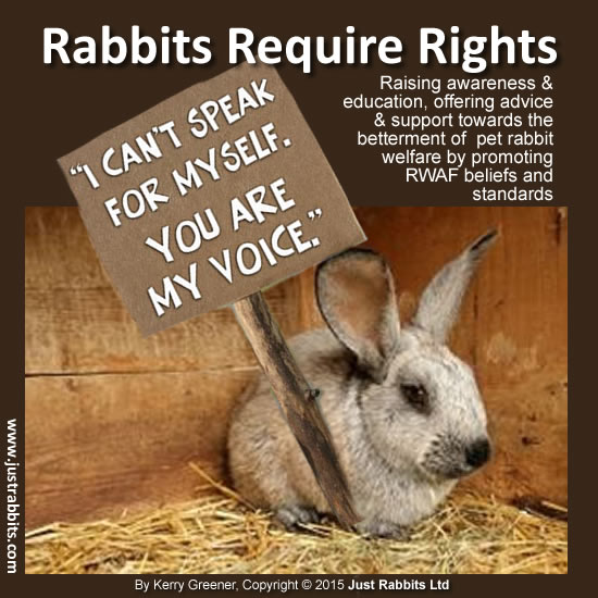 550xNxrabbits-require-rights-poster.jpg.pagespeed.ic.DTrmab5LfD