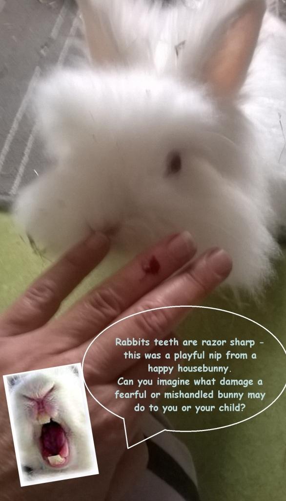 bunnybite