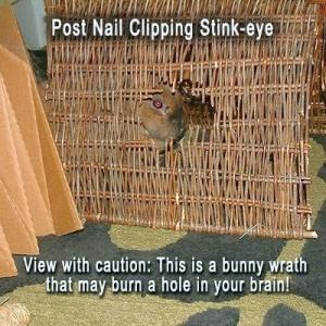 Post nail clip stink eye