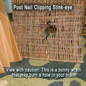 Post nail clip stink eye