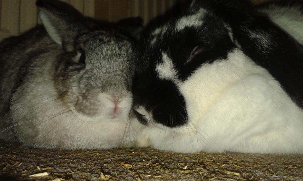 snuggle buns