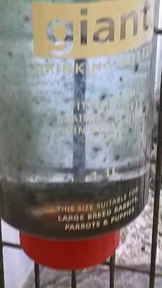 Loo-loo pet shop water bottle