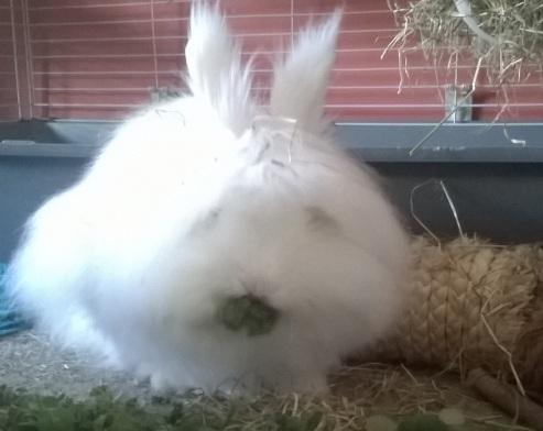 fluffy-maissie